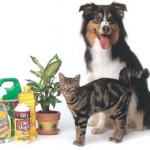 Pet Poison Prevention Month- Pack Mom Tips